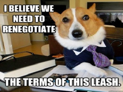 lawyer-dog-6_thumb